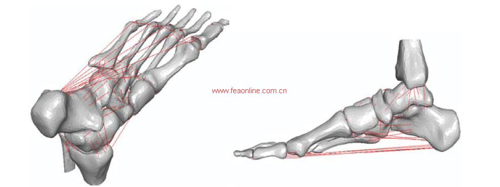 高跟鞋在不同步态周期下对足部关节和韧带的影响